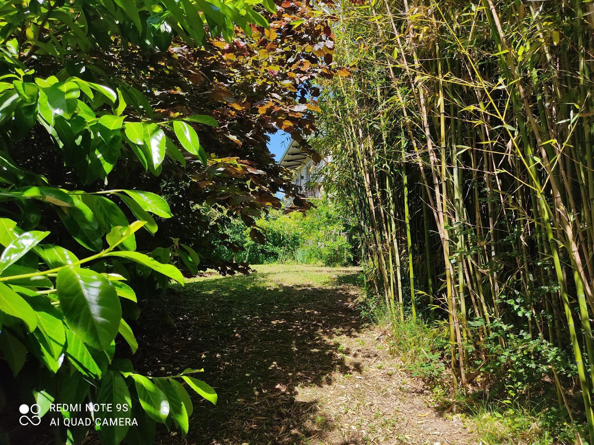 Bambou2
